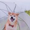 着物の雨対策!雨コートがない!100均の代用品や雨に強い着物も!
