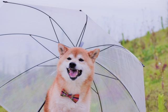 生憎の雨だワン!